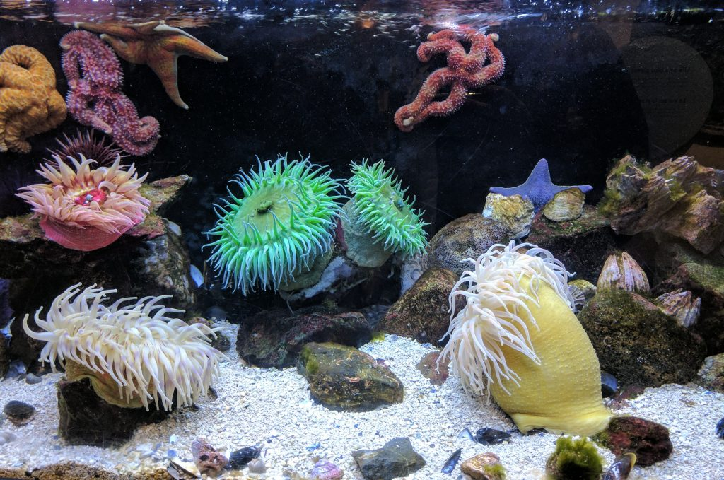 best_corals_for_beginners