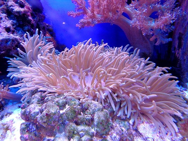 best corals for beginners
