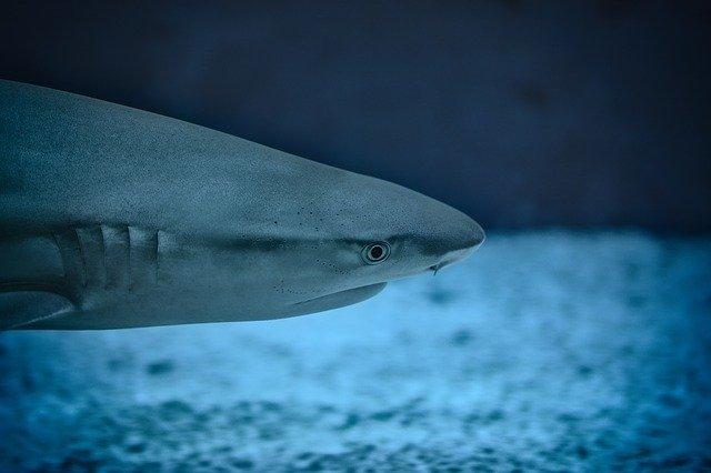 best sharks for saltwater aquarium